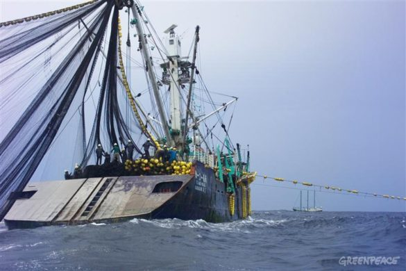 ISSF updates report assessing world's tuna stocks against MSC standard