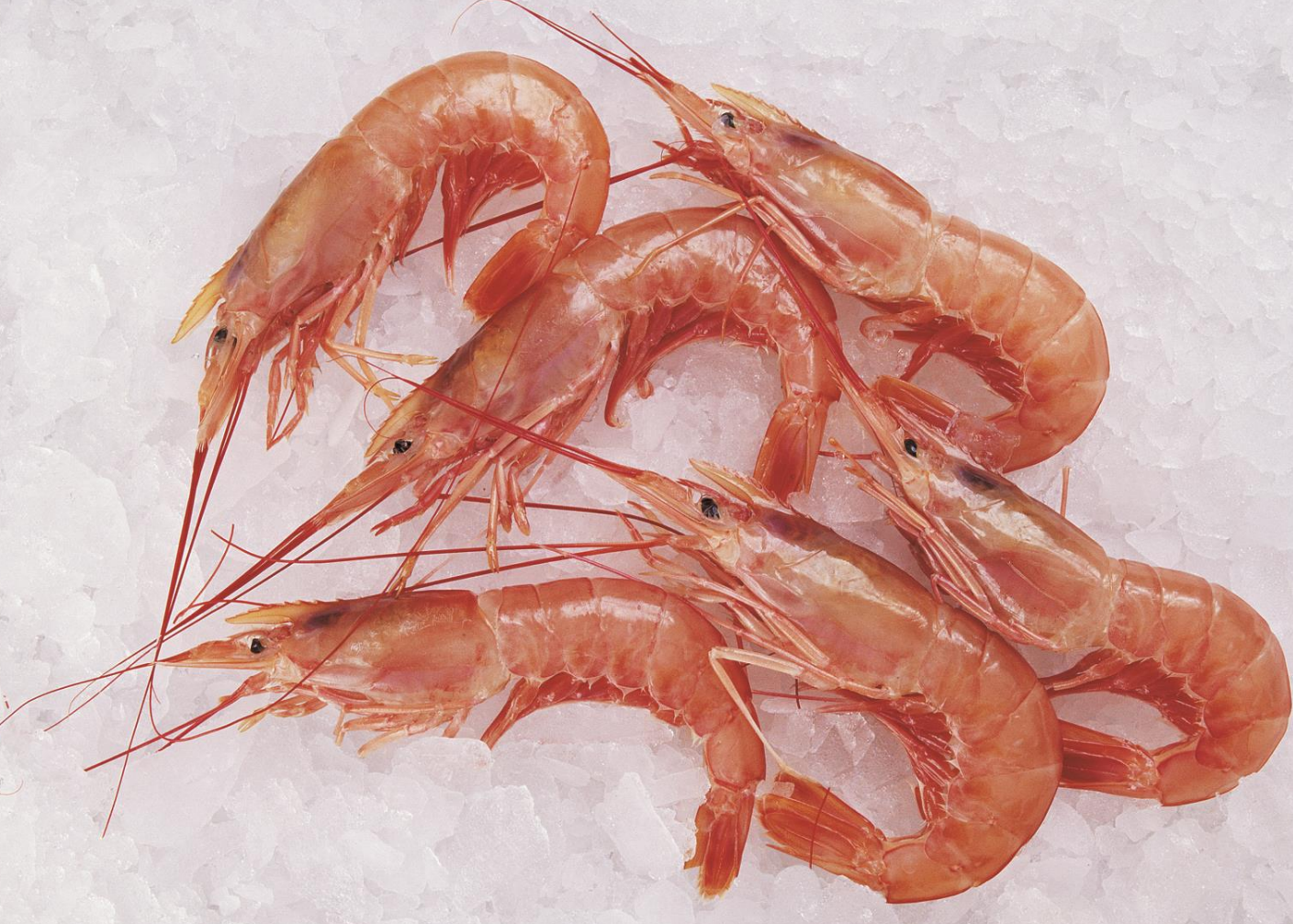 Growing global reach, firm prices for Argentine shrimp ...
