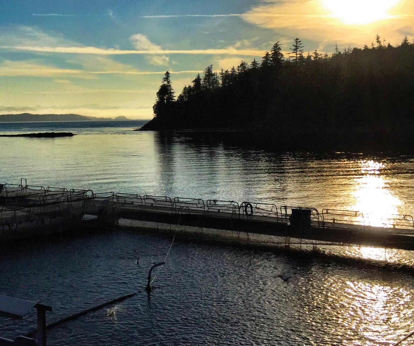 Report: BC salmon farmers plan antibiotic reductions ...