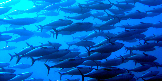Costa Rica Introduces New Tuna Management Model