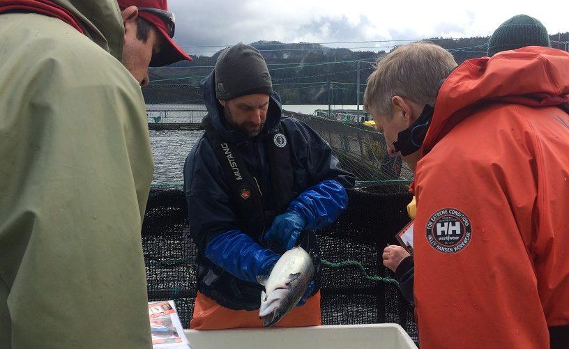 Marine Harvest News