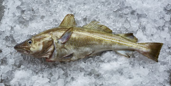 Msc Labeled North Sea Cod Will Be On Waitrose Counters