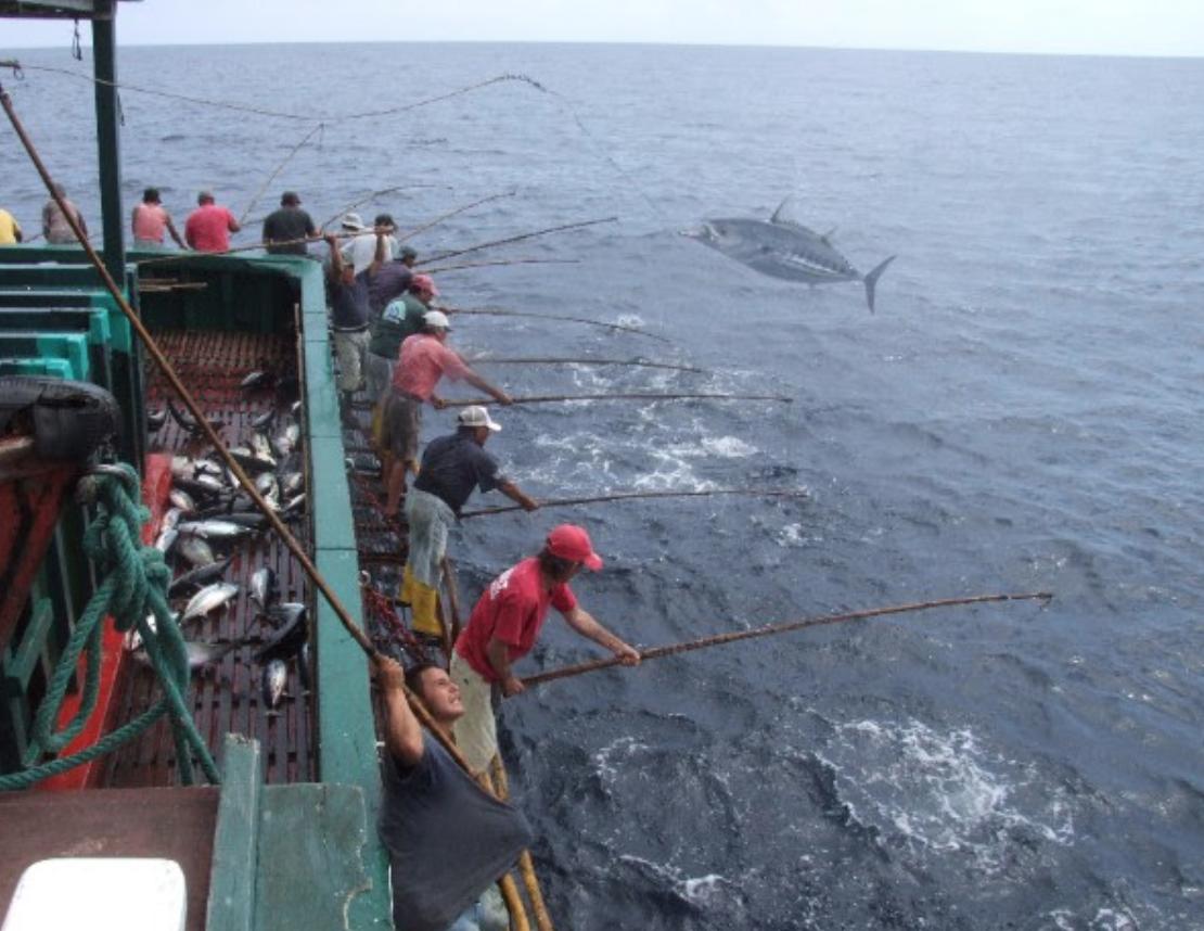 Ecuadorean tuna fishermen first in south america to join for Tuna fishing pole