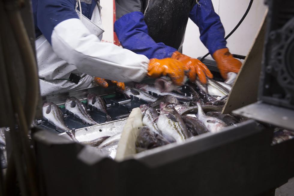 Russian Fishery Company Russian pollock
